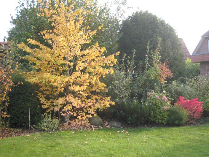 Herbst im Eulengarten