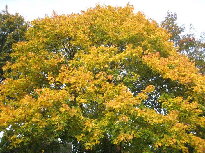 Der Herbst auf dem Eulenwanderweg